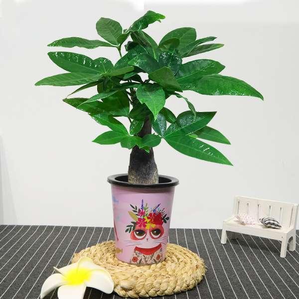 这3种植物放进家中让你今后越来越旺